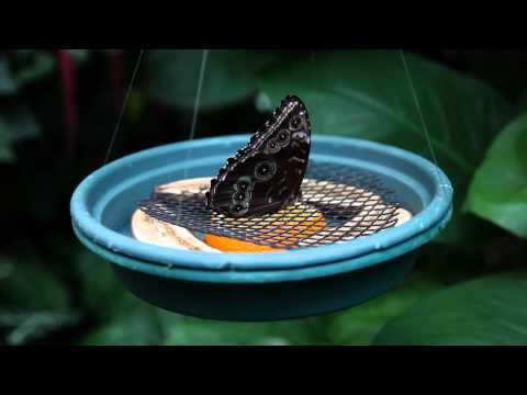 Tour of Facilities  | Victoria Butterfly Gardens