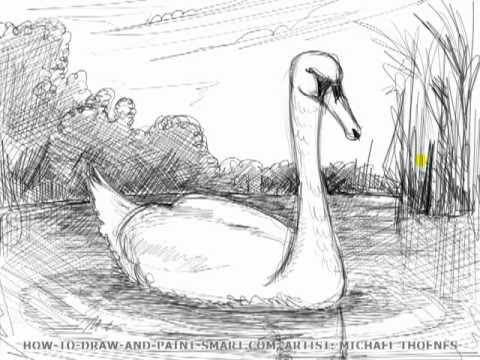 Drawing Lesson: How to Draw a Swan