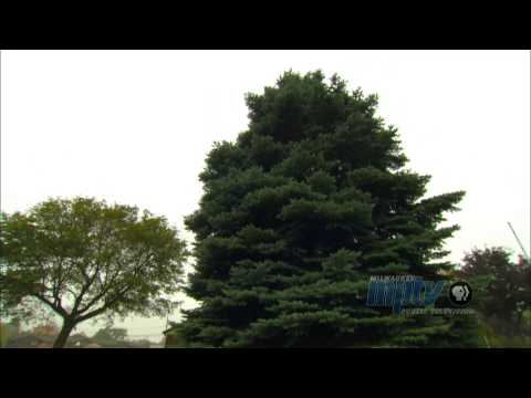 100 Years of the Milwaukee Christmas Tree | John Gurda and John McGivern talk history #2