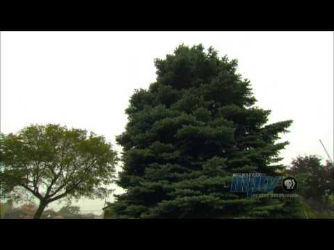 100 Years of the Milwaukee Christmas Tree | John Gurda and John McGivern talk history #2