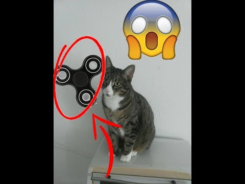 My Cat Gooby's First Thoughts On Fidget Spinners - UCccE5menA2k61poF1REyEAg