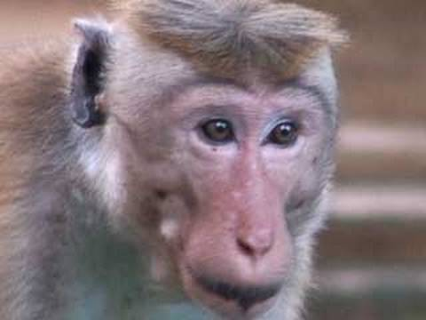 Funny Monkey For kids