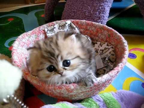 Most Innocent Kitten Alive - The Original (India - 07.25.11)