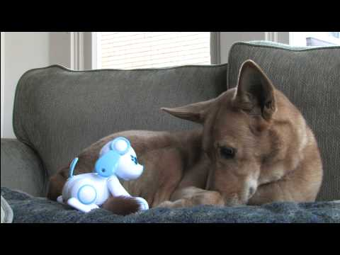 Classic Game Room - WAPPYDOG review for Nintendo DS