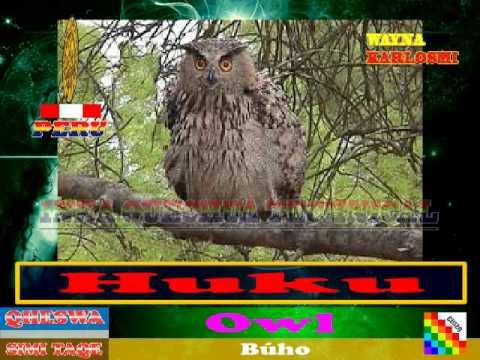 AM Qheswa Zoology (Perú): VOL.01 LOS ANIMALES EN LA ZOOLOGIA QUECHUA INKA (AM)