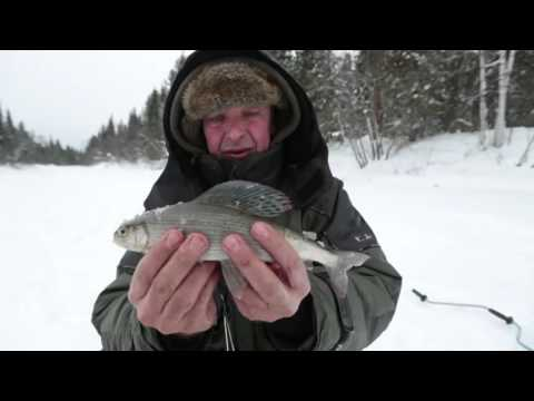 Диалоги о рыбалке рыбалка на хариуса на вишере