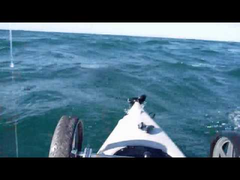 Kayak Fisherman vs Great White Shark