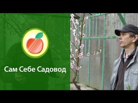 Купить саженцы персика
