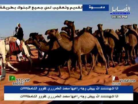 منقيه الشامخات للمالك محمد بن عبدالله العامري السبيعي
