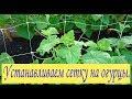 Устанавливаем сетку на огурцы. Сад и огород выпуск 055