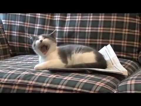 I-m a Stupid Cat!