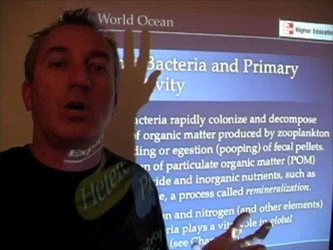 Ocean Productivity - Role of Heterotrophic Bacteria