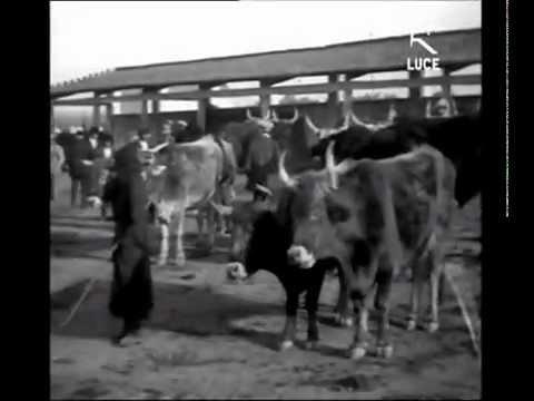 La città di Oristano nel 1932 [ Istituto LUCE ]