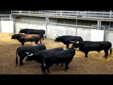 PENÚLTIMO ENCIERRO San Fermin 2012 | Toros ganadería J.P Domecq | 13/7/2012
