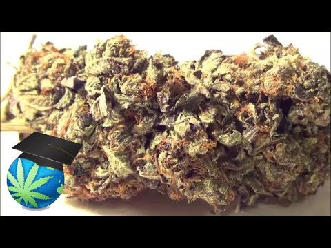 How To Tell Good Quality Weed From Bad