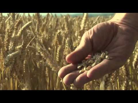 Food Matters Official Trailer