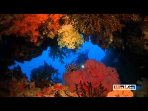 1080p HD WMVHD Imax Sampler - Coral Reef Adventure