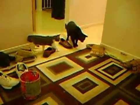 Cats get scared by a rug!
