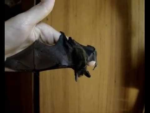 Форекс модель летучая мышь