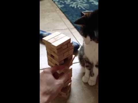 بالفيديو..ذكاء قطة في لعبة قطع الأخشاب
