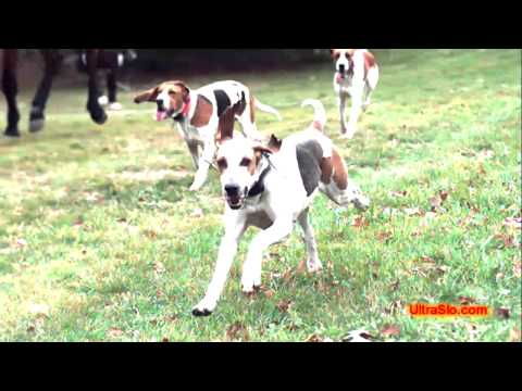 Hunting hounds in slow motion