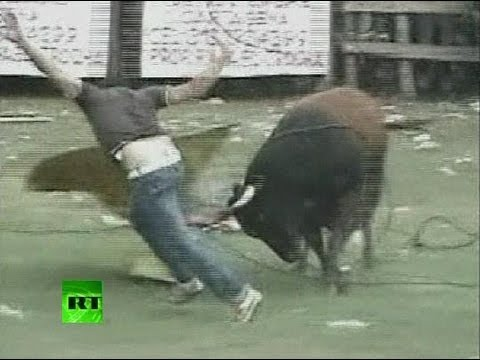 Video: Angry bulls vs drunk fighters in Colombia
