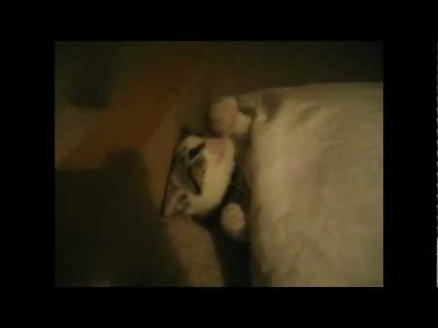 The Cutest Cat Gets Trapped By Falling Pillow