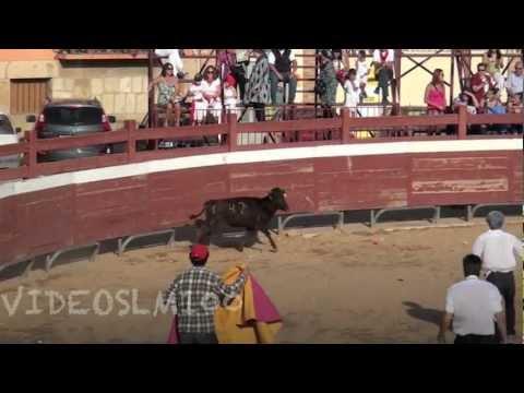 charlotada con vaquillas en VIANA 2012
