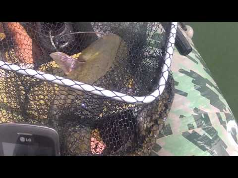 рыбалка сома на дону и маныче