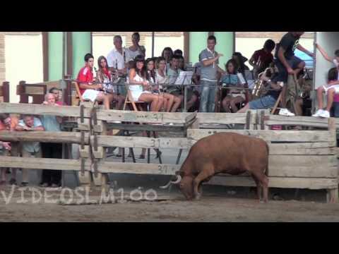 Una vaca arranca un madero del burladero