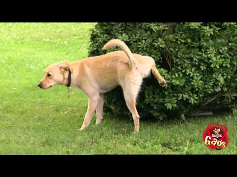 Just For Laughs 2012 - Best Dog Pranks