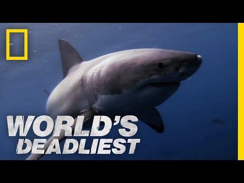 World's Deadliest - Great White Shark vs. Seal