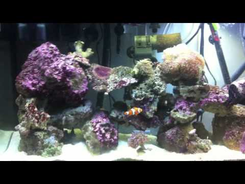 30 Gallon Reef Tank Day 126 velvet
