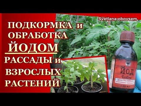 Йод применение при выращивании земляники 4