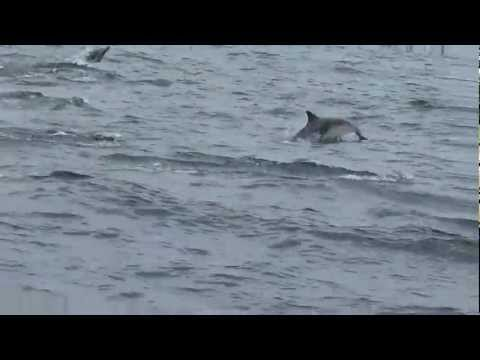 delfines en ensenada B.C