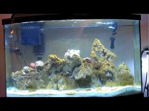 Reef tank Update Day 8
