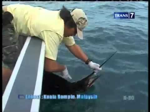 Mancing mania in Rompin October 2011 Part 5