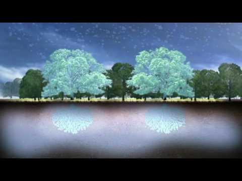 Cambio climático y bosques 1