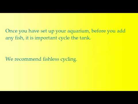 How to Cycle a Tropical Aquarium