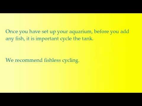 How to Cycle a Tropical Aquarium