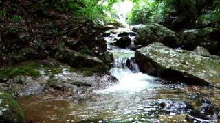 静か さや 岩 に しみ入る 蝉 の 声 意味