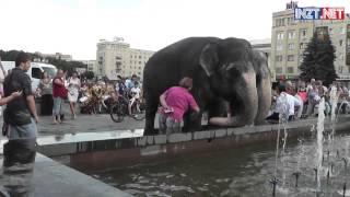 Слоны в центре Житомира