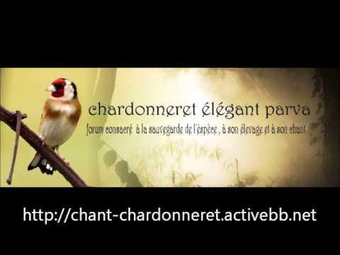 parva chant wis chawchaw chardonneret.