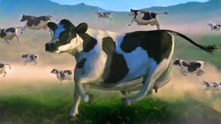 FUNNY COW DANCE 5 │ Nursery Rhymes & Kids Songs