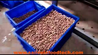 Automatic Cashew Cutting Line | Cashew Processing Machine | Cashew Machine