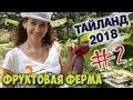 Тайланд 2018/Фруктовая ферма