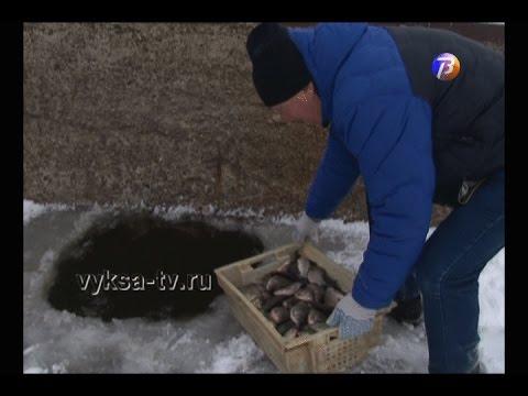 80 килограммов карася выпустили в грязновский пруд