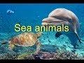 Морские животные на английском языке. Sea animals. Learn sea animals