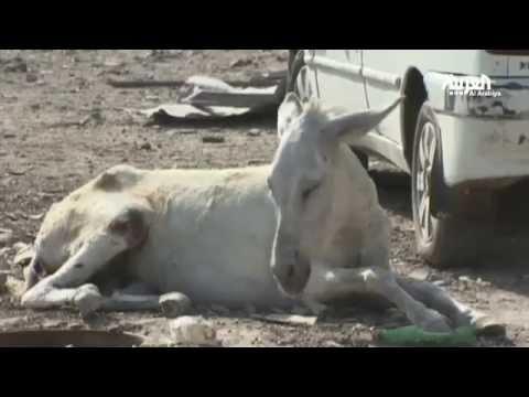 بالفيديو : شاهد الحيوانات في غزة.. حتى حمامة السلام ماتت