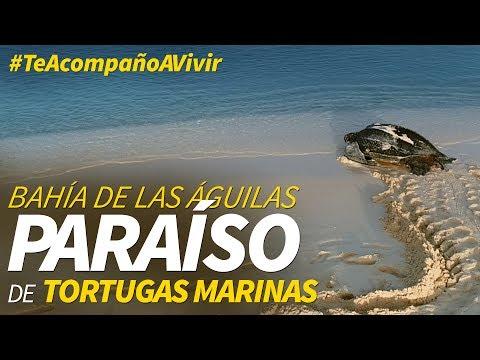 Tortugas en Bahía de las Águilas